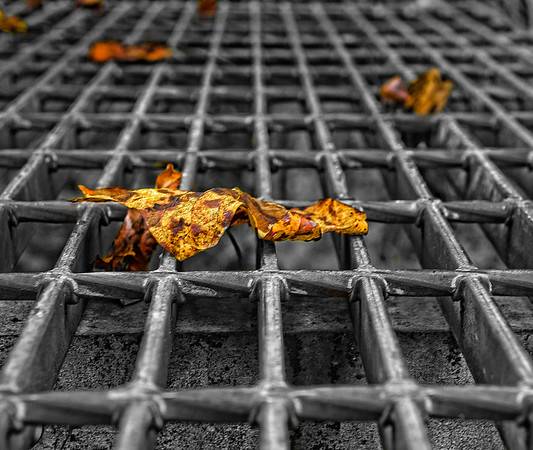 Oct 30 - Fall Leaves on a Grate