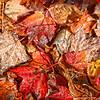 Nov 14 - Bed of Leaves