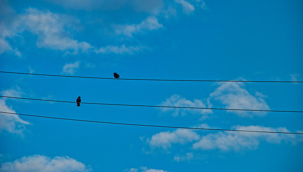 Mar 30 - Three lines and two birds