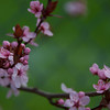 April 15 - Spring Buds and Blooms<br /> <br /> Happy Tax Day