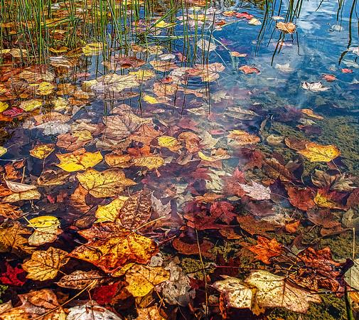 Nov 5 - Fall Leaves in Lake