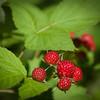 July 8 - Rasberries