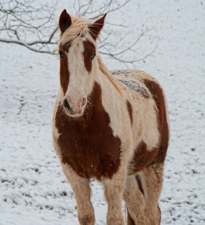 Feb 8 - Matt Dillon Standing Guard - this is my son's horse and a good horse he is!  It was a very cold day.  You can see the snow on his back isn't melting.<br /> <br /> Thanks for the comments on my Two Old Posts yesterday.