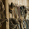 Mar 3 - Horseman's Barn Wall - halters, hats, and rope.<br /> <br /> Thanks for all the nice comments on Scarlet yesterday!  She is my friend's dog and I think she is of mixed breed.  Have a great Sunday.