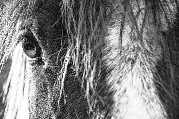 Nov 15 - The Eye of the Horse