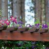 Sept 2 - In My Sister's Garden