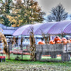 Oct 22 - Pumpkins at the Farm Market<br /> <br /> This is an HDR image from 5 images with 1 fstop difference.  I will post a few more in the next couple of days.  I loved the colors, depth, and light that resulted.<br /> <br /> Thanks again for your comments on the chevy impala images I posted.  I haven't been able to return the comments on others in the daily community.  I will still be posting here as it motivates me and helps me to improve my techniques but will probably not have time to comment.