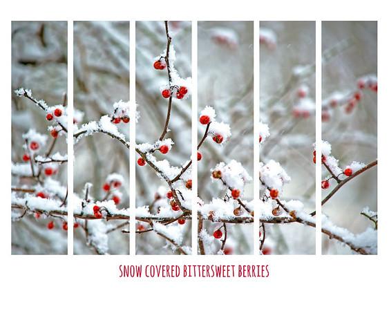 Jan 8 - fluffy snow + nature = photo opportunites