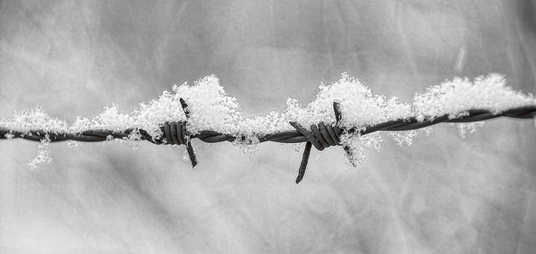 Feb 25 - Barbed Wire and Snow