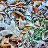 Dec 29 - Frosty Leaves #1<br /> <br /> I haven't been posting much lately, but will post a small Frosty Leaves series for a couple of days.  I hope everyone in the community has been doing well and is having a great holiday season.