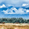Sept 10 - Horses in the valley on a stormy day<br /> <br /> Thanks for your comments on my image of part of the Madison River yesterday!