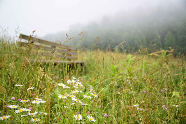 July 10 - Bench in the Grass<br /> <br /> I found this bench surrounded by tall grass and wild flowers along the side of a secluded reservoir.<br /> <br /> Thanks for all your comments on my swim platform image I posted yesterday!