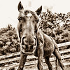 Sept 15 - A Horse is a Horse<br /> <br /> Of course, of course!   Just a fun image of my horse, Tuck.
