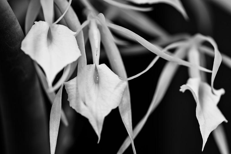 interwoven temptation, orchid-style