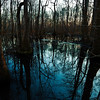 Ebenezer Swamp, Shelby County, Alabama, February 2011, as the sun sets