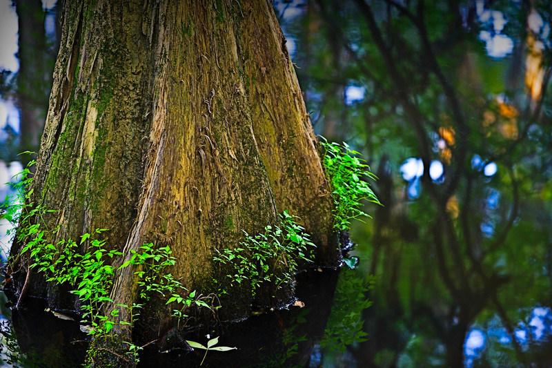 late afternoon in the swamp, Perry Lakes Park, Alabama