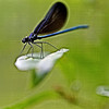 a brief moment of life at Ebenezer Swamp, resting atop a leaf, captured in macro