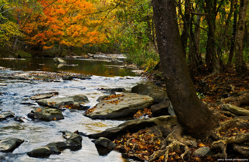 """autumn at Turkey Creek Nature Preserve <p></p> honestly, i blew the shot, this version turned out better: click <a href=""""http://bit.ly/tHqLO0"""">here</a>."""