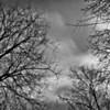 intricate branch patterns, January 2011