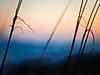 sea oats at sunset, Navarre Beach, FL