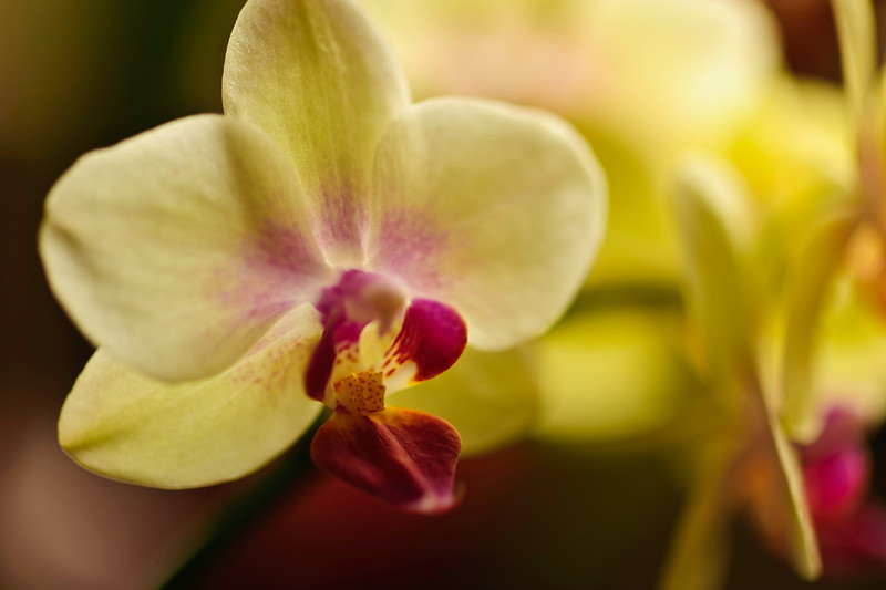orchids plus afternoon light
