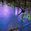 Ebenezer Swamp, near Montevallo, AL