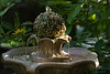 August 19th<br /> <br /> <br /> THE ROSE FOUNTAIN<br /> <br /> This tiny (3 foot high) fountain sits in my garden.  It not only adds the wonderful sound of bubbling water, but the birds love to  land on the rose ball and drink from the bubbling top.<br /> <br /> And yes, I do sit and listen to the water and photograph the birds...however, being shady at this time of day makes for some difficulty in getting the shutter speed fast enough to capture some of them well...but I'll take the relaxation anyday!