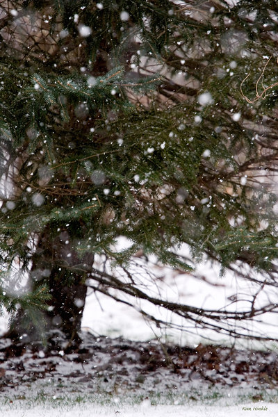 January 10th<br /> <br /> A FLURRY OF FLUFFY FLAKES<br /> <br />  For TomL..I just wanted to give you a few more moments of a snow fix.  Love those fluffy white flakes that don't accumulate much...but are beautiful to watch.