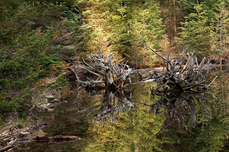 "May 28th<br /> <br /> <br /> SPRING GREENS AND DRIFTWOOD<br /> (Algonquin Park, Canada)<br /> Best viewed in large...<br /> <br /> I wish this image showed more of the ""pop"" to it in this small format.  It was taken getting close to sunset in the very yellow green new growth of the trees. I tried applying some of the new techniques learned last week to it..I hope it looks reasonable on your monitors as well.  Critiques are welcome.."