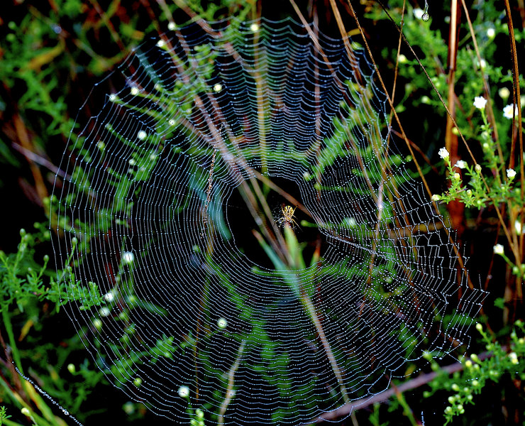 SPIDER WEB FUN<br /> <br /> We went looking for a new washing machine today...no time for taking photos...so here is one from yesterday that I had fun with...For someone who fears spiders, I certainly have been fixated on them for two days!  (Try to view this one in the large format..it looks much more interesting...)