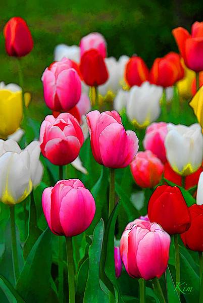 May 3, 2009<br /> <br /> ~ SPRING ~<br /> <br /> For me, nothing says SPRING like tulips and daffodils! <br />  Shhhh, don't tell my mom that this is the front of her Mother's Day card next week.  <br /> (I lost myself in the computer today playing with this image, and I just had to share it with all of you :-) )