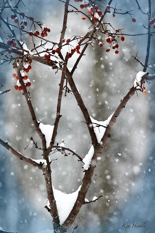 1/15/09<br /> <br /> CRABAPPLES IN THE SNOWSTORM<br /> <br /> With temperatures plummeting <br />   and more snow on the way,<br /> I added a little color<br />   to brighten this cold, cold, winter day...<br /> <br /> Hope you're staying warm...and feeding the birds AND squirrels... :-)