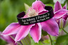 """May 25, 2009<br /> <br /> TRIBUTE TO A FALLEN SOLDIER<br /> <br /> My son Mike, who is working in Afghanistan, ordered a memorial bracelet for a fallen soldier. <br />  Sgt. Johnny Peralez Jr. was the trauma medic in the unit where Brian, a friend of my son, fought in Iraq.  My son, Mike, wanted to wear this bracelet in solidarity with this friend, and as a tribute to this young soldier who lost his life when a roadside bomb blew up his humvee.  PLEASE READ BRIAN'S LETTER BELOW.<br /> <br /> """"Johnny was our lead trauma medic. He was driving for Chris that day because of a strange series of circumstances that I won't even go into. What you need to know is that between our first and second deployments, they discovered that he had a heart condition that made him non-deployable. He refused to stay behind even though most of us didn't even want to go. He said that the unit and his soldiers needed him. He focused on training the medics because he knew how important they were to the unit's role.                <br /> <br /> When we were in Kuwait, I saw a large group at one end of our Quonset hut and when I made my way through it SGT P was sitting on a cot with two five-inch scalpel wounds in each leg. There were four medics suturing him up from either end of the wounds. I discovered that he had shot his legs full of anesthetic and opened the wounds up himself with a scalpel. He had the medics practicing sutureing wounds. When I asked him what the hell he thought he was doing he said """"Sir, these soldiers need training and this is the best way to get it done."""" You would have liked him, he was fascinated with the technical aspects of the human body and medicine. When he taught, the entire unit would turn up for his classes and listen with fascination. When we would ask why or how something was the way it was, he would always respond with the same reply: """"Because the human body is an amazing thing.""""<br /> <br /> Brian<br /> <br /> Here is a link.<br /> <br /> <a href=""""http://"""