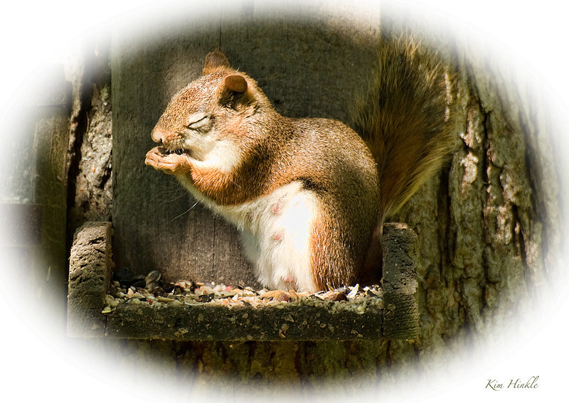 A SQUIRREL'S PRAYER<br /> <br />                                                                                                                      ...Dear Lord,  please hear my prayer,<br />                                                                                                                           Just give me time to get some air!<br /> <br />                                                                                                                         These nuts are such a special treat..<br />                                                                                                                      Oh God, those little ones sure can EAT!<br /> <br />                                                                                                                         Eight more weeks of providing chow..<br />                                                                                                                     Oh Lord, I need a rest...and I need it NOW!<br /> <br />                                                                                                                                               Amen....<br /> Momma Red Squirrel