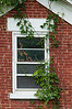 July 23<br /> <br /> WINDOW TO NATURE<br /> <br /> This is a window on an abandoned century home.  If increase the size to xl you can see all the detail in the plants and bricks.  The vine is Virginia Creeper and this fall this scene wiil be filled with red leaves against that red brick...Looking at all the cool architecture photos taken by so many of you I am inspired to try to branch out and try a few .