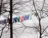 February 28th<br /> <br /> AMISH CLOTHESLINE<br /> <br /> Visiting Amish country is so peaceful and quaint..wish I lived closer so I could capture more of the essence of their simplicity of life.  No matter where I stood for this shot, the clothes were behind the trees...still the color against the snowy hill was appealing to me. It was a sunny day, but cold! This is one heck of a way to starch clothes  ;-) brrrr