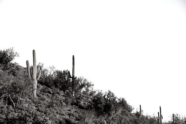 Desert in Black and White