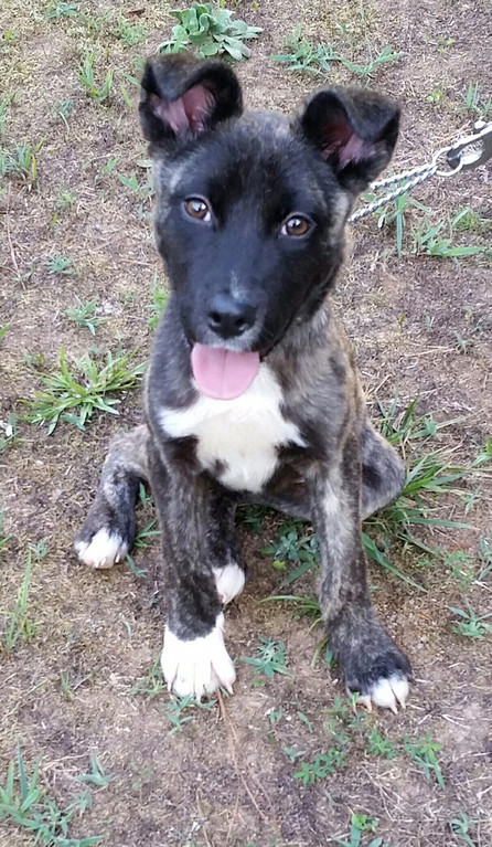 . Libby is a 6-month-old Akita mix rescued by John and Erica Miggins of Stone Ridge. Libby took honorable mention.