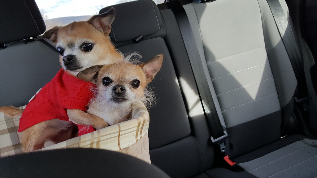 . Honorable mention goes Jade and Jena, rescued 8-year-old chihuahuas owned by Doris Kulick of Hurley.