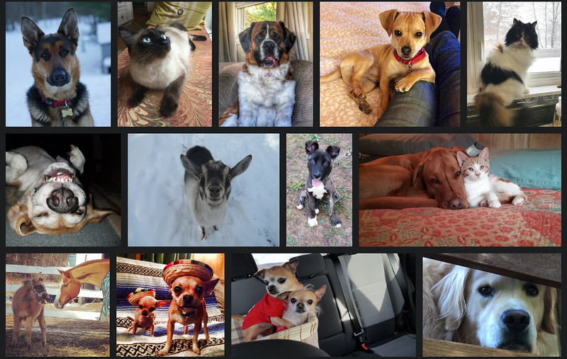 . The Freeman�s 13th annual pet contest took more than 320 nominations from the Hudson Valley and the Catskills in February 2017.
