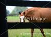 Theme:  Fences<br /> Peeking through the fence!