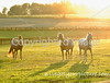Theme: Backlight<br /> Horses in the neighboring field of a friend's hay farm.<br /> August, 2012