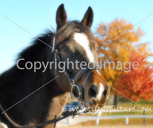 Theme: Autumn