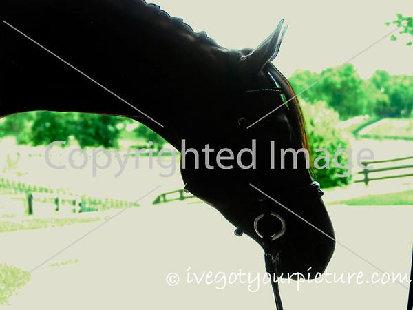 "Theme:  Backlight<br /> ""Aero"", 2012"