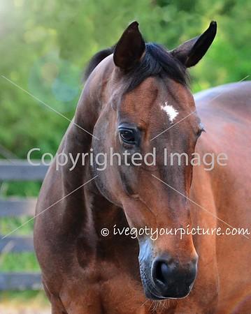 Theme:  Favorite Horse(s)<br /> Casey!  June 2018