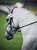 Theme: Gray<br /> Antebellum Farm Combined Test, 2013