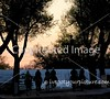 """Theme:  Sunrise<br /> """"Sunrise at Keeneland""""<br /> 2016"""