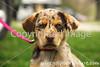 Theme: Spots (Puppy Spots)