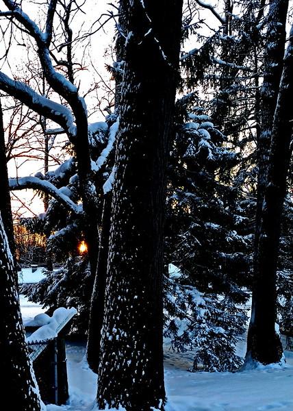 12/31   Sun Peeking through Trees