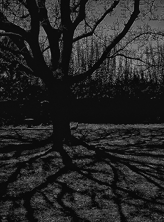 1-23-11<br /> By the light of the silvery moon.